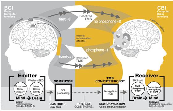 experience-communication-cerveau